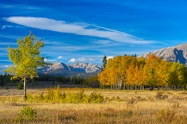 Aspen Meadow, Kootenay Plains, David Thompson Country, Alberta