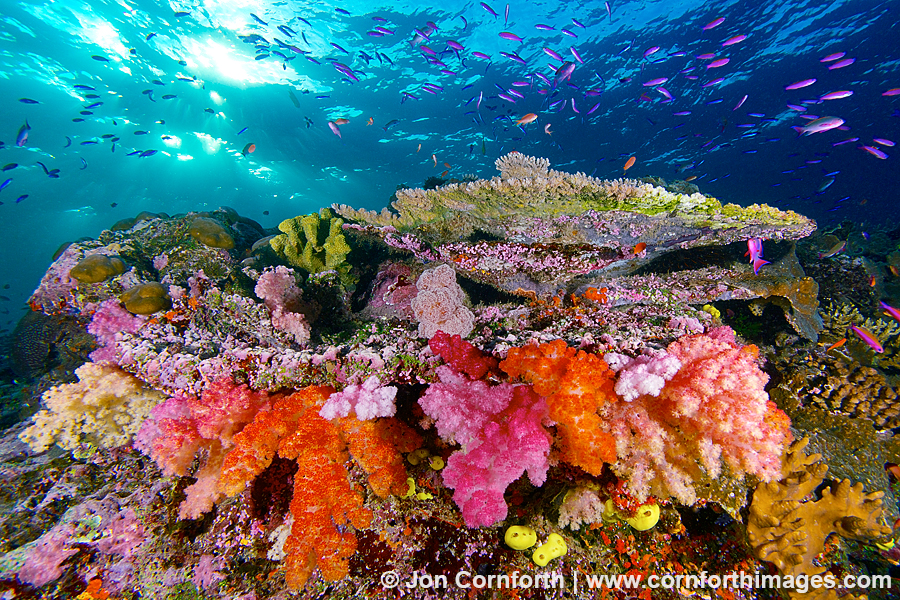 Coral Photography
